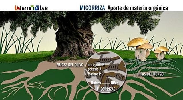 Micro y macro organismos del suelo for Importancia de los suelos